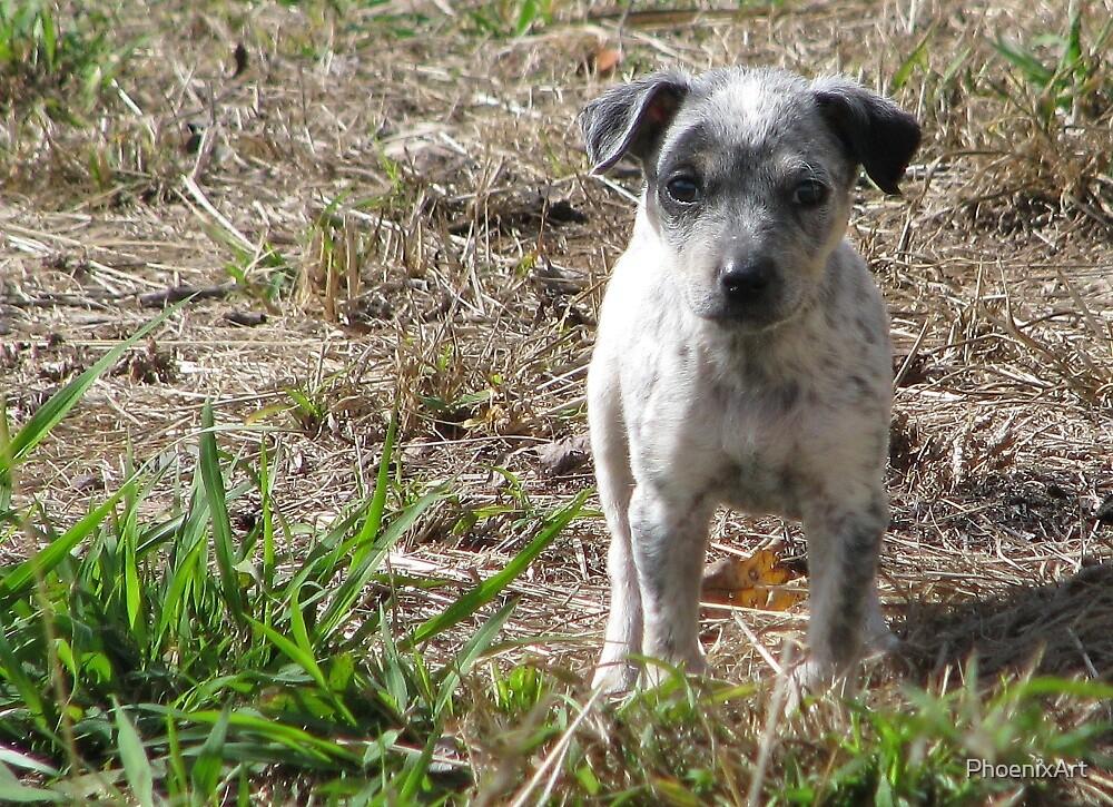 Little Blue Puppy by PhoenixArt