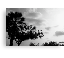 Trees CLXXVII Canvas Print