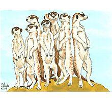 Daily Doodle 11-Meerkats Photographic Print