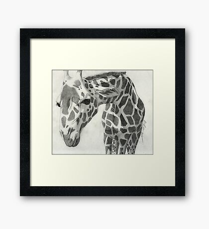 A giraffe in pencil Framed Print
