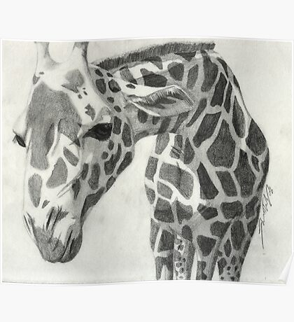A giraffe in pencil Poster