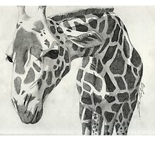 A giraffe in pencil Photographic Print