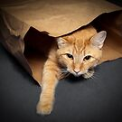The Cat & The Bag by Amber  Lavallee