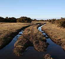 Following Tracks - Bodmin moor by Ellie Reed-Mumford