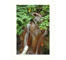 forest stream Art Print