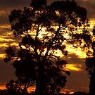 Red Gum Sunset by Clive