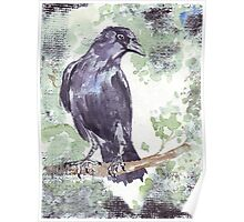 Crow wears a band of Silver Poster