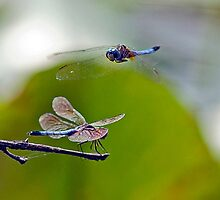 COURTSHIP by Dennis  Small