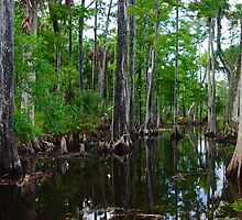 Cypress Swamp Riverbend Park Jupiter,Fl. by ejlinkphoto