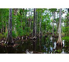 Cypress Swamp Riverbend Park Jupiter,Fl. Photographic Print