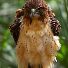 Bad Hair Day by ejlinkphoto