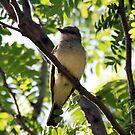 Northern Mockingbird by Dave & Trena Puckett