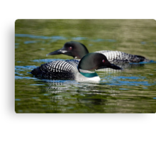 Two Loons Canvas Print