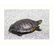 Box Turtle 9934 Art Print