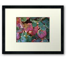 Coloured leaves 2 Framed Print