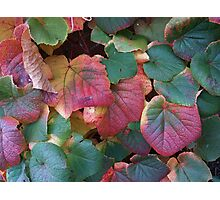 Coloured leaves 2 Photographic Print