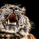 Tiger Tiger Burning Bright by carol brandt