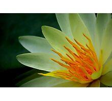 Waterlily Closeup Photographic Print