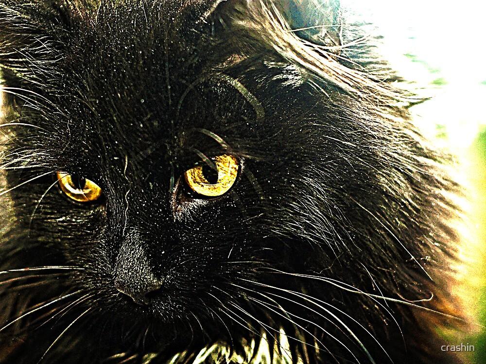 Kitten. by crashin