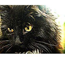 Kitten. Photographic Print