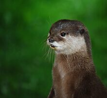 Oriental Small Clawed Otter by Daysleeper40