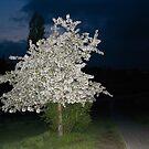 perfectly shaped tree by Marina Starik