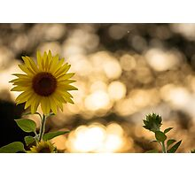Sunflower Field Artist Linda Hanes Photographic Print