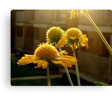 ever after  Canvas Print