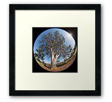 Suburban Gum Tree Framed Print