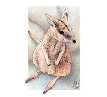 Rock wallaby (watercolour) Photographic Print