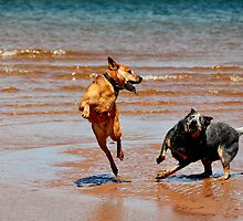 Atlantic Cowdogs by SamTheCowdog