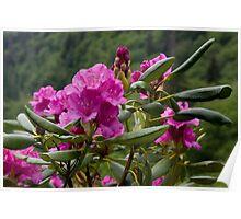 Mountain Beauty II Poster