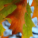 Autumn tones by Joe Mortelliti