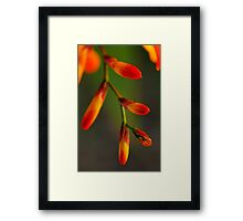 Natures Red Yellow and Green Framed Print