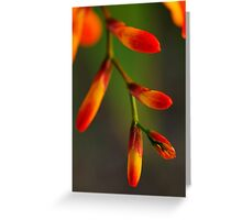 Natures Red Yellow and Green Greeting Card