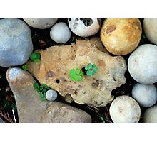 Growing From The Stone Photographic Print