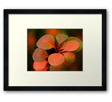 Soft Winter Colours Framed Print