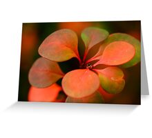 Soft Winter Colours Greeting Card