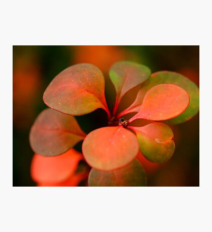 Soft Winter Colours Photographic Print