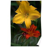 Common Tawny Daylily & Yellow Lilly Poster