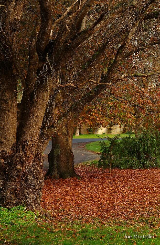 Forrest Park by Joe Mortelliti