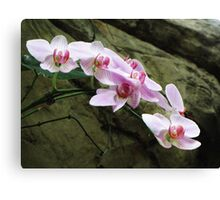 Orchid String Canvas Print