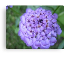 A tournament of Purple Canvas Print