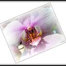 Orchid 2 by Mattie Bryant