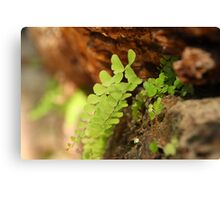 Ferns in the stonework Canvas Print