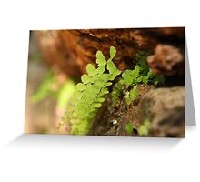 Ferns in the stonework Greeting Card