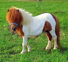 My Sister's Horse by Wanda Raines