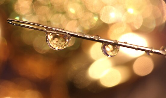 A Couple Of Drops Of Bokeh by WOBBLYMOL