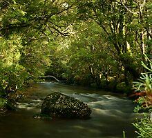Pencil Pine Creek, Cradle Mountain by michellerena