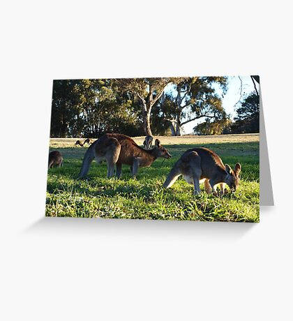 Sunday In The Park.   A C T Australia Greeting Card